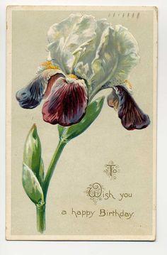 Iris vintage birthday card #Iris