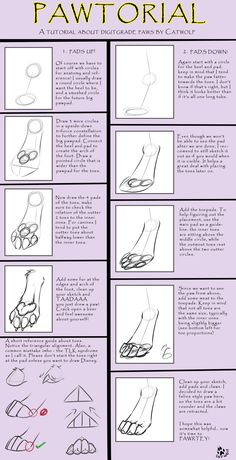 Digigrade Paw Tutorial [by Catwolf] by AAMP -- Fur Affinity [dot] net