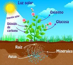 DOCENTECA - La fotosíntesis -Actividades y experimentos para primaria