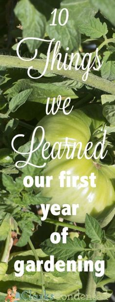 10 Things we Learned During our First Year of Gardening - successes, failures, and how you can learn from our mistakes! via @clarkscondensed