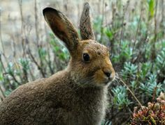 Meet Harold the hare who has just settled down in Co. Waterford!
