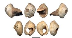 7126dbbcd20 Recent analysis of three ancient seashells reveals that they are likely to  have been used as