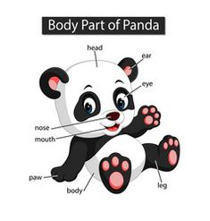 Diagram showing body part panda vector Improve English, Learn English, Learning English For Kids, Kids Learning, Science Education, Kids Education, Animals Name In English, Animal Body Parts, Alphabet Pictures