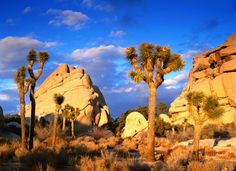 Joshua Tree National Park,Ca.
