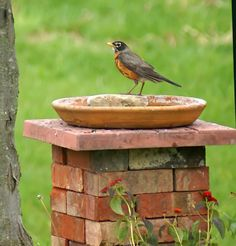 Create a bird bath or feeder with bricks you might have laying around from other home projects or pick them up at a home improvement store for cheap... Just stack them up and lay a piece of wood on top and then lay a saucer on top. There you have a nice bird feeder to enjoy bird watching. Fill up with either water or bird seed.