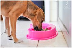 comida caseira para cachorro