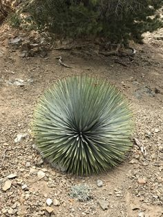 How round this plant is. http://ift.tt/2pja77t
