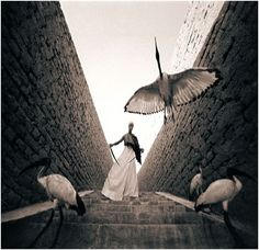 from Ashes and Snow // by Gregory Colbert