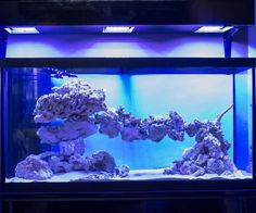 Tips and Tricks on Creating Amazing Aquascapes - Page 14 - Reef Central Online Community