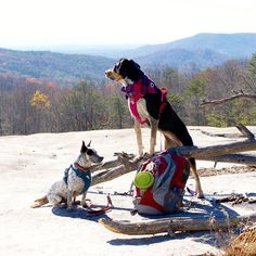Dog-friendly hikes: Stone Mountain State Park, NC @lifewithmutts