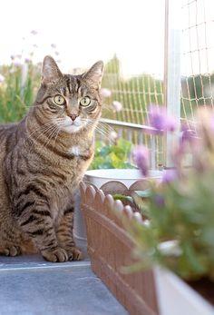 aentschies Blog: Unser Katzenbalkon – Das Katzennetz