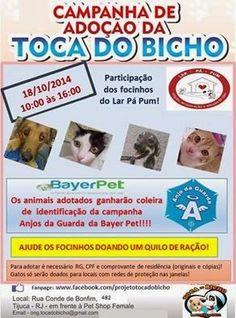 Bonde da Bardot: RJ: ADOÇÃO DE ANIMAIS NA TIJUCA NESTE SÁBADO (18/10)!