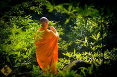 This young monk was wandering in the jungle in Thailand. At the Khao Yai National Park you will find many monks who come for meditation purposes on the weekends. Khao Yai National Park, National Parks, Path International, Om Mani Padme Hum, Photos Of The Week, Videos, Paths, Thailand, Tours