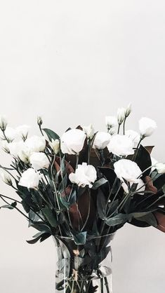 Find images and videos about white, flowers and wallpaper on We Heart It - the app to get lost in what you love. Plant Wallpaper, Flower Wallpaper, Nature Wallpaper, Flower Backgrounds, Wallpaper Backgrounds, Iphone Wallpaper, Wallpaper Ideas, Image Allah, White Flowers