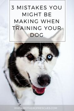 What's going wrong in your training? This article might help! dog training | mistakes | dog training | positive reinforcement | training secrets | force free training | dog mom | training philosophy | positive training
