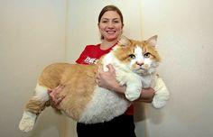 Die größte Katze der Welt!
