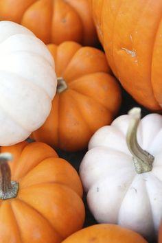 In Season: Pumpkin - The Kitchenthusiast