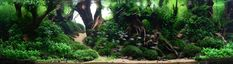 Tips and Tricks on Creating Amazing Aquascapes - Page 44 - Reef Central Online…