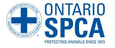 A zookeeper was charged with animal cruelty after a video surfaced showing him allegedly torturing a Siberian tiger with a whip. Thank the Ontario SPCA for investigating the matter and charging this notorious animal abuser. Chatham Kent, Animal Protection, Animal Cruelty, Dog Show, Animal Welfare, Humane Society, Animal Rescue, Ontario, How To Plan