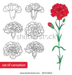 Vector Set With Outline Carnation Or Clove Flower, Bud And Leaves In Black And Red Isolated On White Background. Fancy Flowers For Spring Design, Coloring Book In Contour Style. Carnation Drawing, Carnation Flower Tattoo, Design Tattoo, Tattoo Designs, Flor Tattoo, Tattoo Schwarz, Pattern Texture, Mothers Day Images, Watercolor Flower