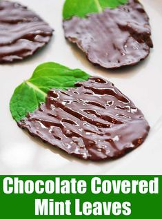 Incredibly fresh tasting and oh so pretty, chocolate covered mint leaves make a natural, very healthy, delicious dessert.
