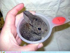 May I borrow a cup of bunny, please?