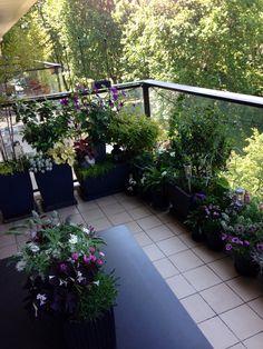 Mon ancien balcon parisien