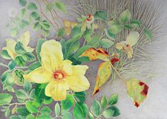 """Garden Sunshine"" by Mary K Hyatt Colored Pencil ~ 14 3/4"" x 20 3/4"" I was drawn to the contrast of yellow, green and deep red. The linear area to the right was inspired by the presence of some very thin plant stems."