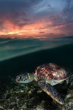 Sunset swim ~ By Andrey Narchuk