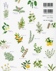 Floral Illustration & Botanical Illustration: watercolor illustrations Kawazoe Miki MIKI KAWAZOE Illustrations (watercolor)