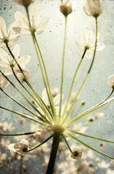 Botanical Explosion - Fine Art Print - Nature Photography