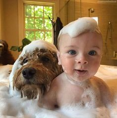Terrier Breeds, Airedale Terrier, Education Canine, Dogs Trust, Dog Wash, Thing 1, Shower Time, Cute Dogs And Puppies, Dog Friends