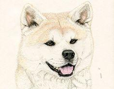 "Check out new work on my @Behance portfolio: ""Akio"" http://be.net/gallery/45801269/Akio"