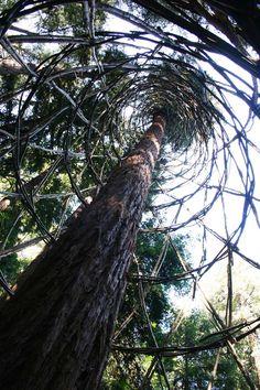 Redwood Vortex - Chris Drury|Chris Drury
