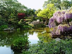 Hakone Gardens, Saratoga CA. Established in 1915 this is the oldest Japanese Garden in the western hemisphere.