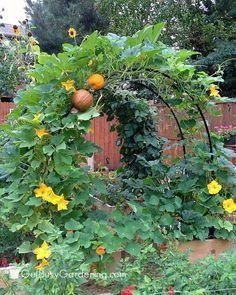 Beautiful Gardens#beautiful #gardens Vegetable Garden Planner, Backyard Vegetable Gardens, Vegetable Garden Design, Garden Soil, Garden Art, Vegetables Garden, Fresh Vegetables, Glass Garden, Vegetable Ideas