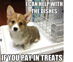 Corgi pup helps with the dishes! Cute Corgi, Corgi Dog, Cute Puppies, Teacup Puppies, Lab Puppies, Animals And Pets, Baby Animals, Funny Animals, Cute Animals