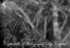 """Capturing"" the life around me Photography By Captured...Photography By Crystal"