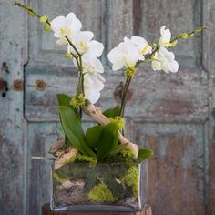 Amazing Orchid Arrangements Ideas To Enhanced Your Home Beauty - Page 9 of 4 Amazing Orchid Arrangements Ideas To Enhanced Your Home Beauty - Page 9 of 4 - JustinVo love flowers: Cattleya Fred Cole x bicolor Orchid Flower Arrangements, Orchid Planters, Orchid Centerpieces, Orchid Pot, Flower Planters, Enchanted Florist, Corporate Flowers, Flower Garden Design, Deco Floral
