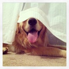 """""""This is the perfect hiding spot...They'll never find me!"""" lol if I can't see them they can't see me :)"""