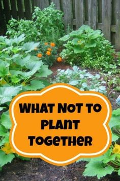 Starting your own garden can seem daunting at first. There are so many different types of vegetables, herbs, and flowers that all require different and precise care. Nobody wants to spend months of time, lots of energy and, of course, money on their plant