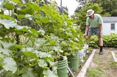 5 Gallon Bucket Gardening - Bing Images