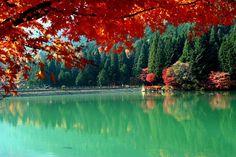Dragon-Rise Region (Discover the Spirit of Japan)…