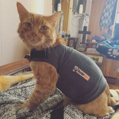 """19 Products Your Cat Needs, Other Than A Cardboard Box - Cat Accessories""""The minute it was available for cats, I bought each of them a Thundershirt. My most anxious cat didn't dig it but it worked like a charm. The three hour move from hellacious Aus Cat Care Tips, Pet Care, Pet Tips, Crazy Cat Lady, Crazy Cats, I Love Cats, Cool Cats, Cat Info, Cat Accessories"""