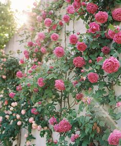 The magic of Provence at Domaine Clos Saint Esteve Beautiful Roses, Beautiful Gardens, Beautiful Flowers, Beautiful Pictures, Flower Names, My Flower, Flower Ideas, Fragrant Roses, Provence Wedding