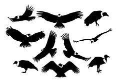 Cóndor Siluetas Vector Condor Des Andes, Inka Tattoo, Andean Condor, California Condor, Native American Symbols, Eagle Tattoos, Tree Quilt, Bird Pictures, Silhouette Vector