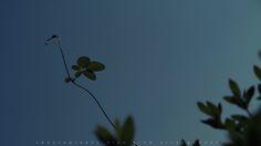 Canon PowerShot G1X 写真 作例