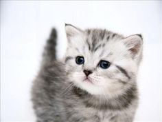 Ideas For Baby Cute Baby Cats And Kittens If you are looking for Baby cute baby cats and kittens you've come to the right place. We have collect images about Baby cute baby cats and kittens in. Cute Kittens, Kittens Cutest Baby, Cute Little Kittens, Cute Baby Cats, Black Kittens, Baby Kitty, Cute Cat Wallpaper, Hd Desktop, Desktop Wallpapers