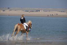 Meer weten over mijn passie: http://www.webcomp.nl?start=fotos       #foto #fotografie #huisdier #huisdieren #dieren #dier #dierenwinkel #dierenpension #dierenhulp