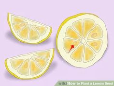 Image titled Plant a Lemon Seed Step 5